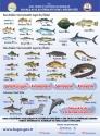 Balık Boyları Avcılık Bilgileri