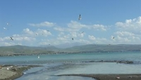 Uçan Balıklar Van Gölüne Geri Dönüyor